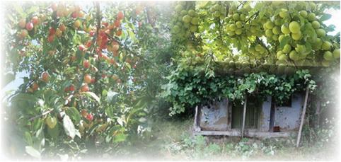 casa de tara cu corcodusi