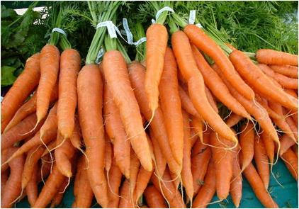 fiziologia gustului morcovul de pusa roth