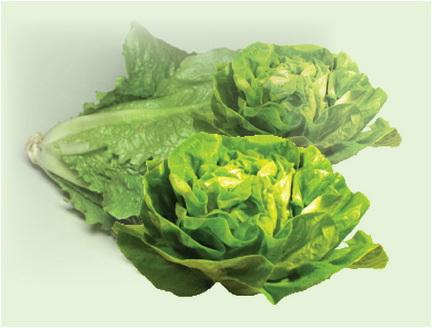fiziologia gustului salata verde istoric pusa roth liber sa spun