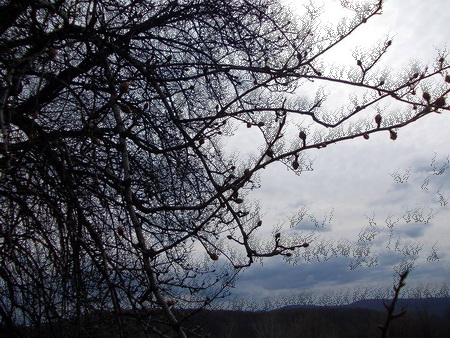 iarna arbore