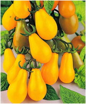 legume rosia portocalie